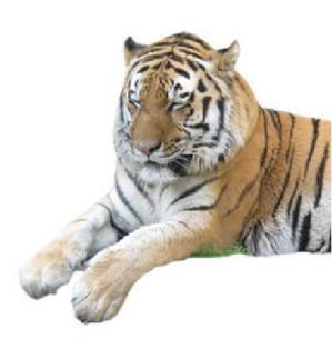 tiger01.PNG
