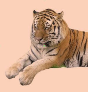 tiger02.PNG