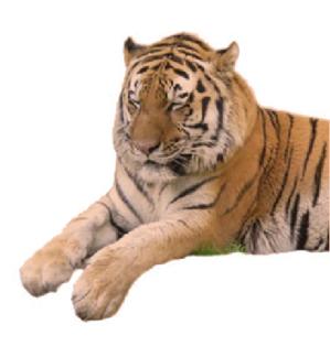 tiger04.PNG